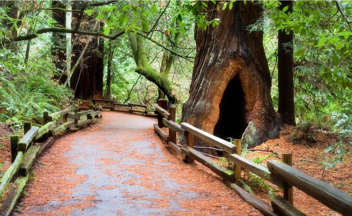 Muir woods day trip from san Francisco