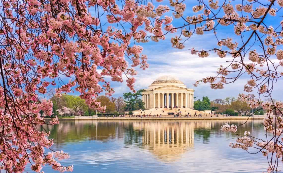 Famous DC Monuments Cheery Blossom season washigton